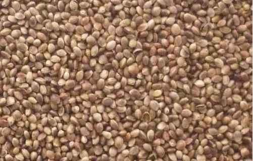 Vanrobaeys - Futter Hanf 2.5kg